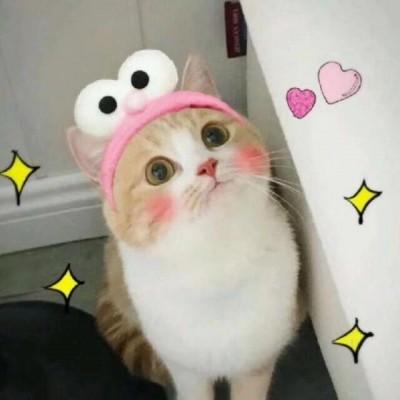 可爱猫咪头像萌萌哒高清 2019微信萌宠头像猫咪呆萌
