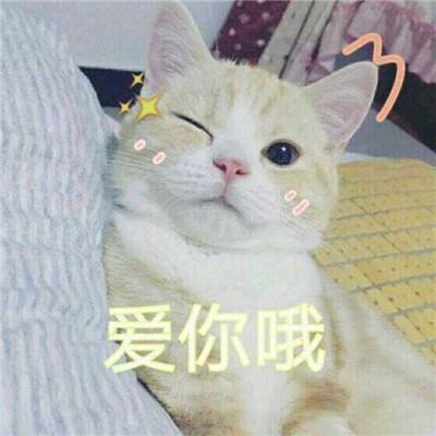 情侣搞怪大图_搞笑的猫狗情侣头像一猫一狗高清大图_呆萌搞笑的狗狗情侣头像 ...
