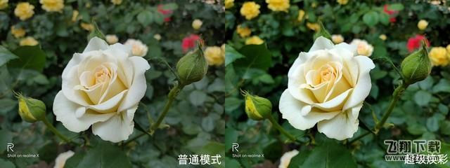 Realme x拍照效果实用评测_52z.com