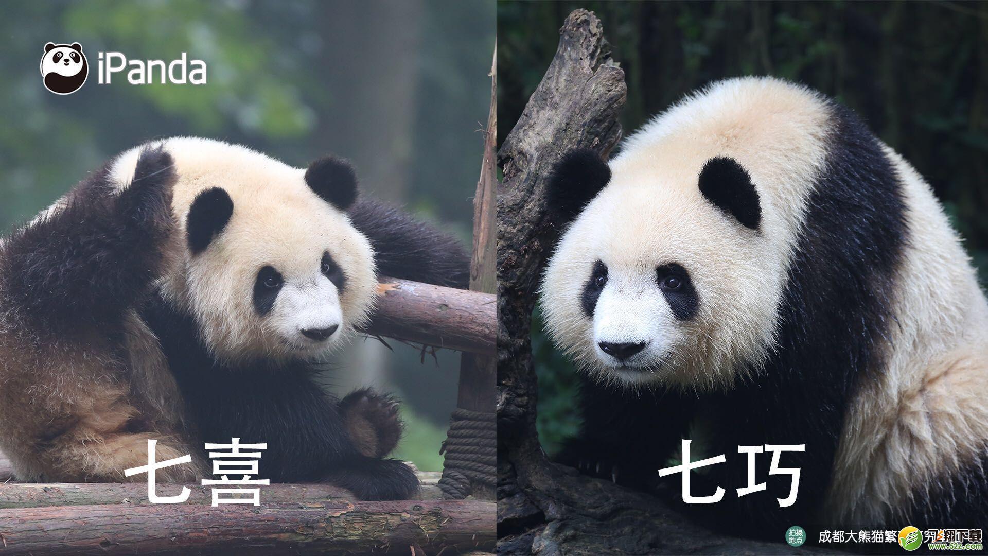 大熊猫认脸APP功能作用使用教程_52z.com