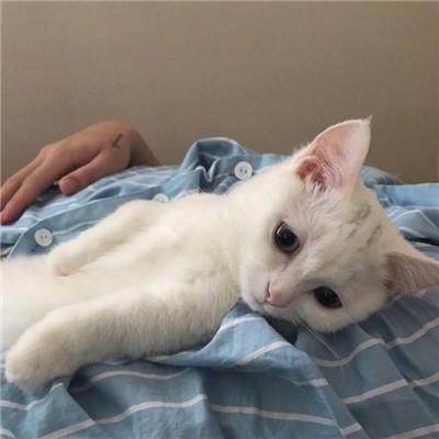 好看的微信头像猫咪萌图片2019 超萌猫咪图片大全微信头像_52z.com