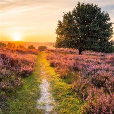 微信最吉利的好看头像自然风景 寓意吉利的风景图片头像_52z.com