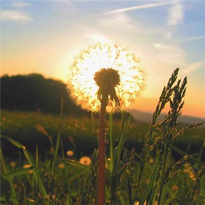 微信最吉利的好看�^像自然�L景 寓意吉利的�L景�D片�^像_52z.com
