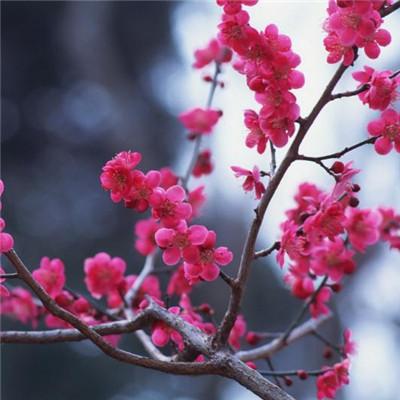 微信最吉利的好看头像风景花卉 唯美又吉利的微信风景头像_52z.com