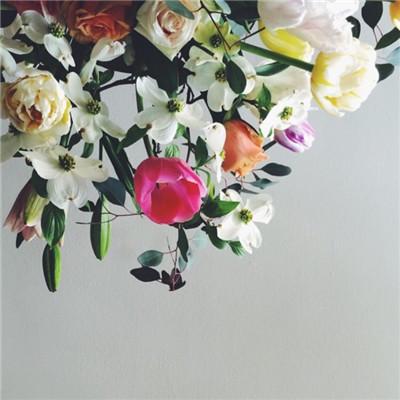 微信鲜花唯美意境头像图片2019 微信最吉利好看的头像漂亮花朵_52z.com