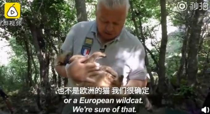 法国猫科新物种是怎么回事 法国猫科新物种是什么情况_52z.com