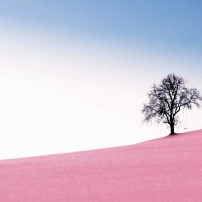 微信头像风景或花草高清图片2019最新 微信最吉利好看的头像漂亮花朵