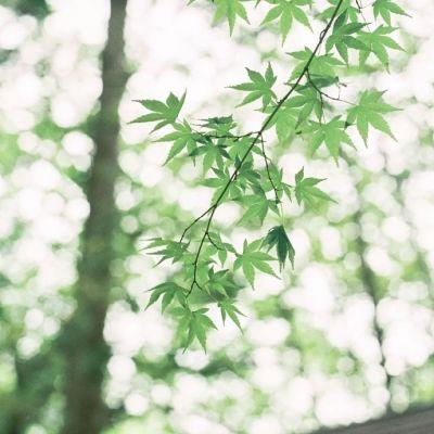 微信头像风景或花草高清图片2019最新 微信最吉利好看的头像漂亮花朵_52z.com