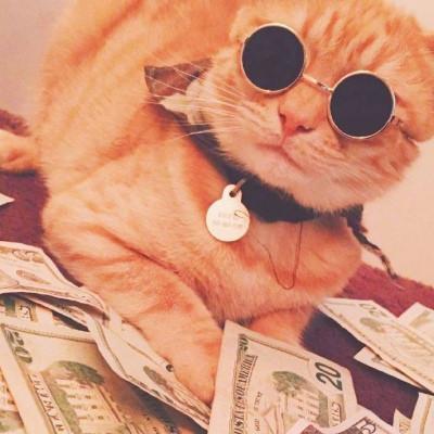 可爱又搞笑的小猫咪头像 招财猫咪好运微信头像