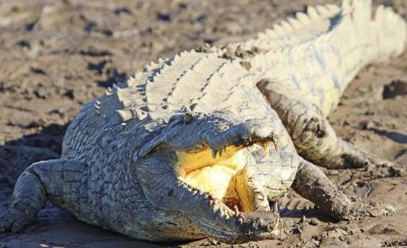 11岁女孩斗鳄鱼是怎么回事 11岁女孩斗鳄鱼是什么情况_52z.com