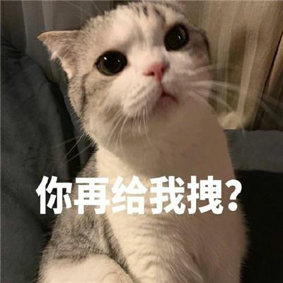 可爱猫咪表情包合集 抖音最火猫咪表情包带字图片_52z.com