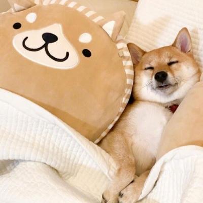呆萌可爱小狗狗头像大全 最近很火的狗头像