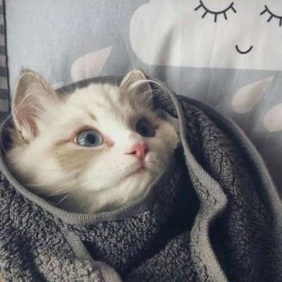 猫咪情侣头像两张一对可爱 萌宠个性情侣头像大全_52z.com