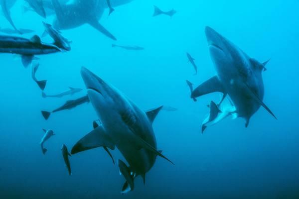 海洋含氧量下降是怎么回事 海洋含氧量下降是什么情况_52z.com