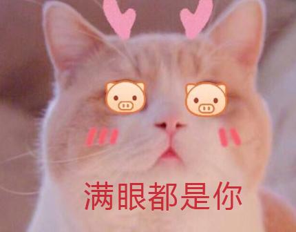 情人节甜蜜虐狗说说大全 2020情人节朋友圈虐狗句子_52z.com