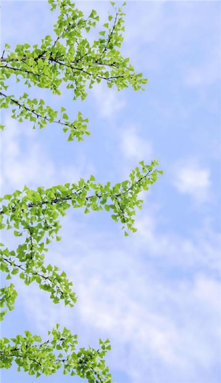 大自然风景壁纸唯美高清 大自然唯美风景高清手机壁纸