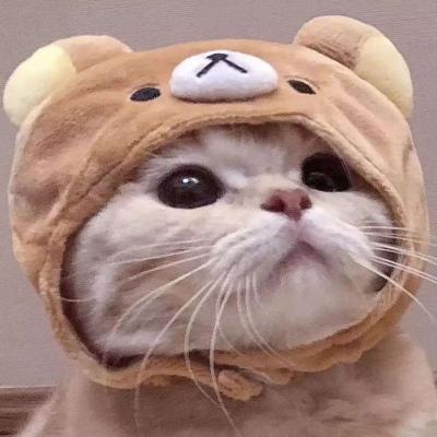 2020可爱猫咪头像高清好看 萌萌哒猫咪头像精选_52z.com