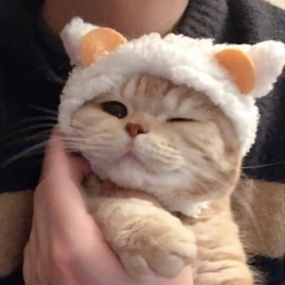 2020可爱猫咪头像高清好看 萌萌哒猫咪头像精选