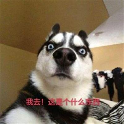 哈士奇表情包搞笑大全 最新哈士奇表情包可爱犯二_52z.com