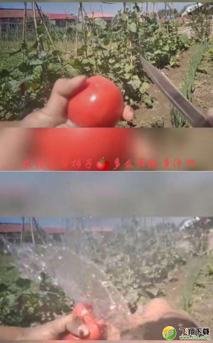 切到番茄的大动脉了梗的含义出处介绍