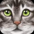 终极猫咪模拟安卓版