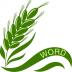 单词小麦 V2.6.1 安卓版