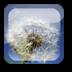 水中蒲公英动态壁纸 V1.6.1 安卓版