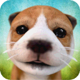 小狗模拟 V2.2.2 安卓版