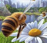 模拟蜜蜂下载_模拟蜜蜂安卓版下载V1.0